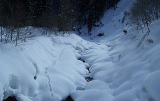 Verschneiter Gebirgsbach in Kirchberg in Tirol