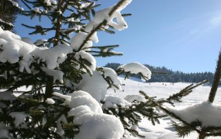 Nadelbäume am Rande einer Piste in Kirchberg in Tirol