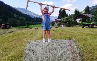 Heu einbringen am Peternhof in Kirchberg in Tirol